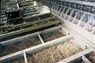 Food and garden waste collected is composted through in-vessel composting