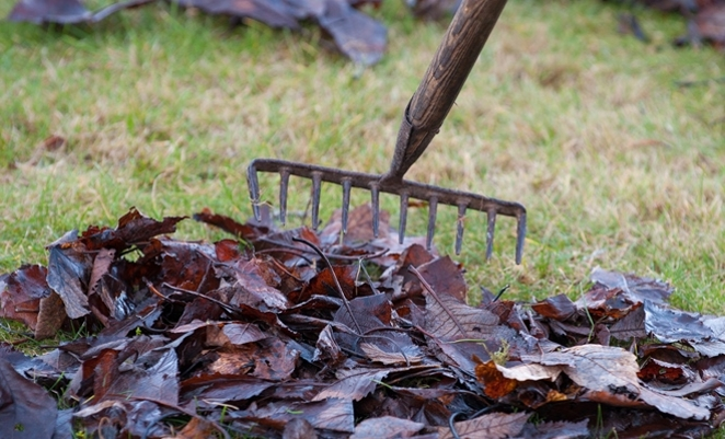 If you have a Garden Waste Permit, collect garden waste such as leaves, grass and weeds