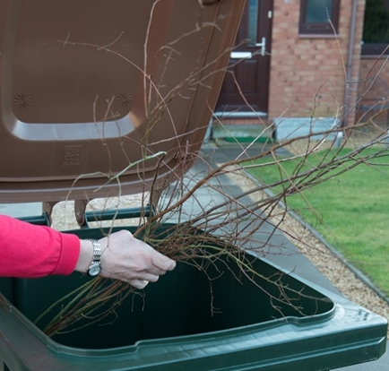 Place garden waste into your brown-lidded bin